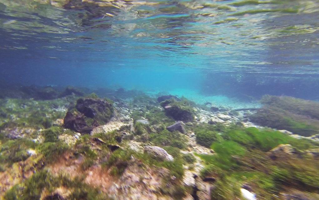 Rio Sucuri Nadando
