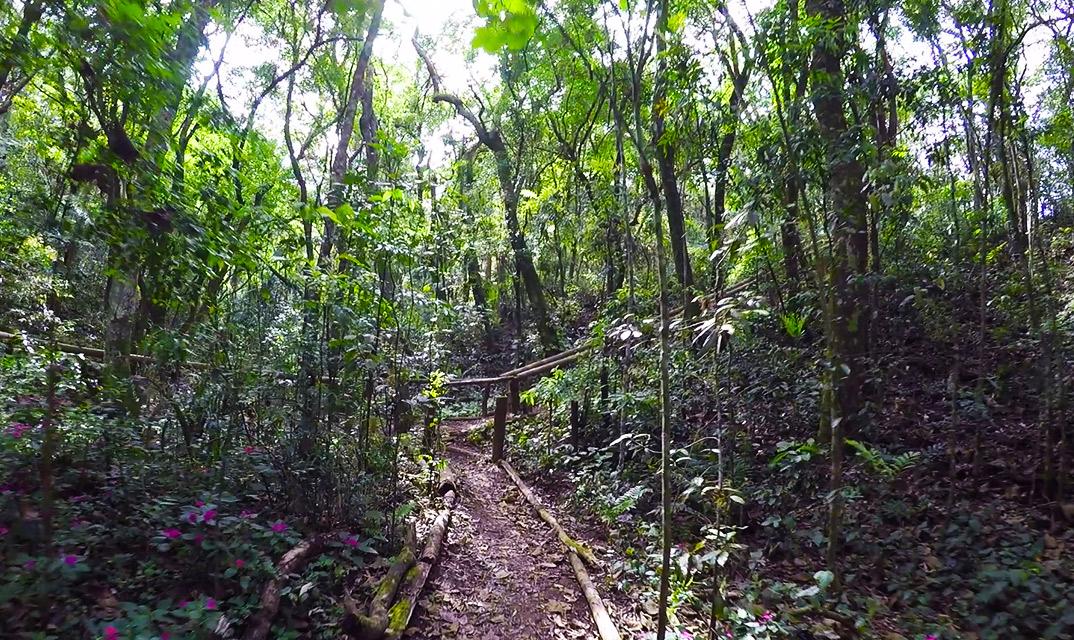 Parque Cemucam Plantas